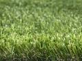 greeneclipse-2