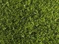 greenfresh-3