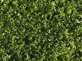 greenfresh-4