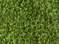 greenoasis-3