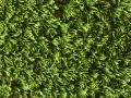 greenoasis-4